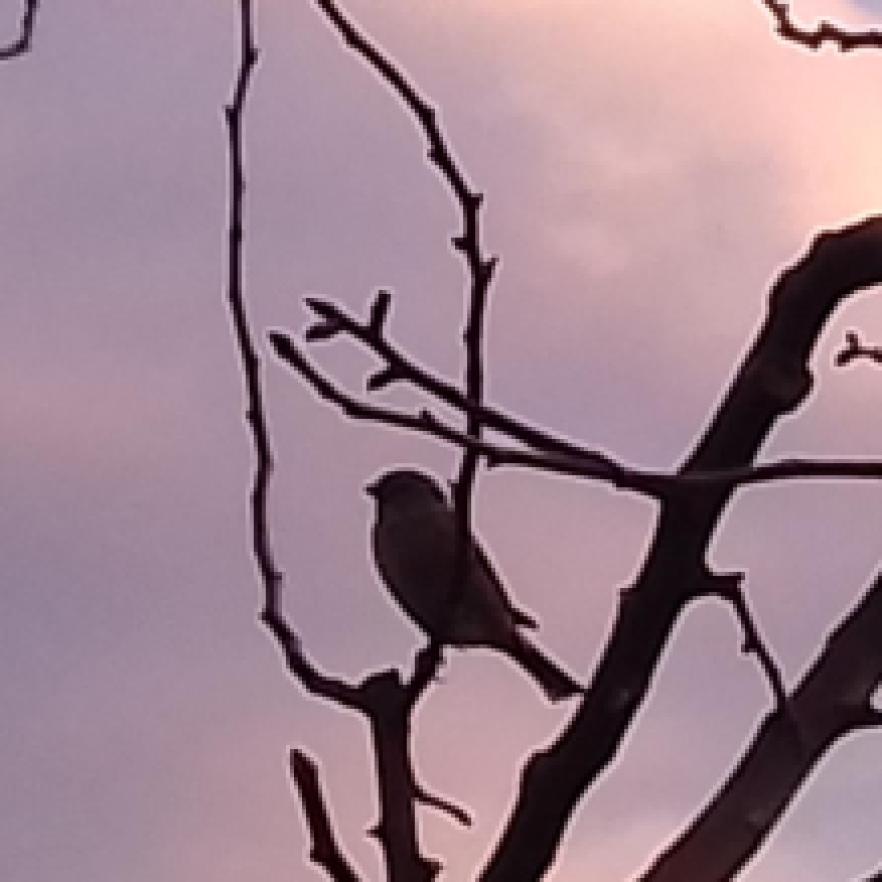 Pasărea din umbră