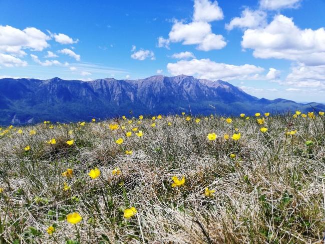 Fig. 11 - Munții Bucegi văzuți de pe Culmea Cumpătu